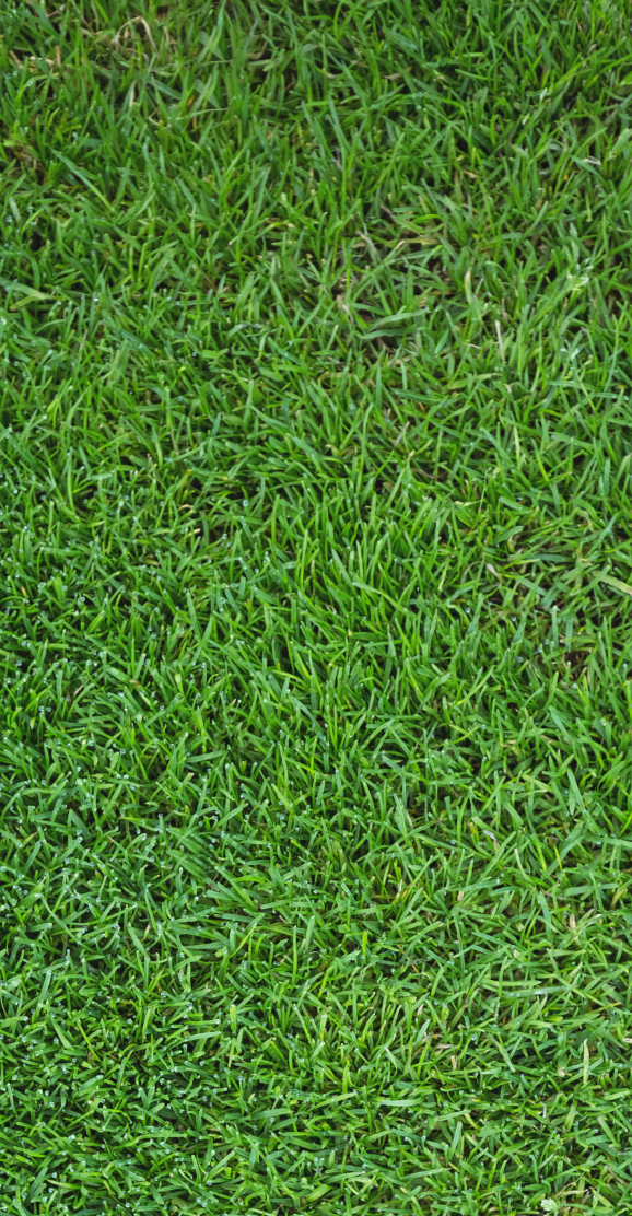 Commercial Grass